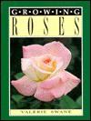Growing Roses - Valerie Swane, Densey Clyne