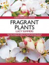 Fragrant Plants. by Lucy Summers - Lucy Summers
