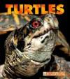 Turtles - Patrick Merrick