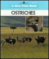 Ostriches - Emilie U. Lepthien
