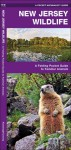 New Jersey Wildlife: An Introduction to Familiar Species of Birds, Mammals, Reptiles, Amphibians, Fish and Butterflies (State Nature Guides) - James Kavanagh, Raymond Leung