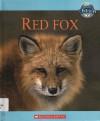 Red Fox - Jen Green