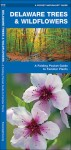 Delaware Trees & Wildflowers: A Folding Pocket Guide to Familiar Species - James Kavanagh