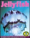Jellyfish - Leighton Taylor