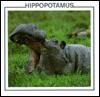 Hippopotamus - Lynn M. Stone