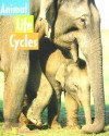 Animal Life Cycles - Susan DeStefano