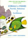 Waterproof Guide to Corals & Fishes of Florida, the Bahamas and the Caribbean - Idaz Greenberg, Greenburg, Jerry Greenberg