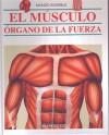 El musculo/ The Muscle (Mundo Invisible) (Spanish Edition) - Parramon