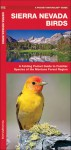 Sierra Nevada Birds: A Folding Pocket Guide to Familiar Species of the Montane Forest Region - James Kavanagh, Raymond Leung