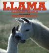 Llama - Caroline Arnold, Richard Hewett