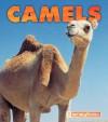 Camels - Kathryn Stevens
