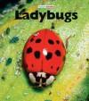 Ladybugs - M.C. McBee
