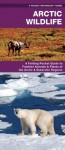 Arctic Wildlife: An Introduction to Familiar Species - James Kavanagh, Raymond Leung