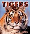 Tigers - Jenny Markert