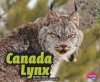 Canada Lynx - Erika L. Shores, Gail Saunders-Smith