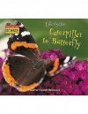 Listen-Read-Think Science: Life Cycles: Caterpillar to Butterfly - Terry J. Jennings