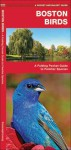 Boston Birds: A Folding Pocket Guide to Familiar Species - James Kavanagh, Raymond Leung
