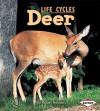 Deer - Robin Nelson