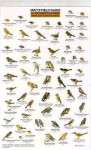 Mac's Field Guide To Southern California Park and Garden Birds (Mac's Guides (Flash Cards)) - Craig MacGowan