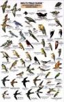 Mac's Guide-S.W. Park-Backyard Birds (Mac's Guides) - Craig MacGowan