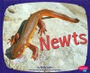 Newts - Molly Kolpin, Gail Saunders-Smith