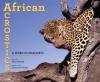 African Acrostics: A Word in Edgeways - Avis Harley, Deborah Noyes