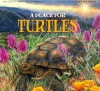 A Place for Turtles - Melissa Stewart, Higgins Bond