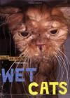 Wet Cats - Mario Garza