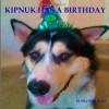 Kipnuk Has a Birthday: Book II of the Kipnuk Adventure Series: 2 (The Adventures of Kipnuk the Talking Dog) - Heather Wolf