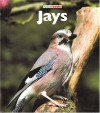 Jays (Naturebooks: Birds) - Mary Ann McDonald