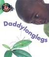 Daddylonglegs - Catherine  Anderson