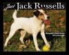 Just Jack Russells - Dusan Smetana