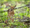 Lost in the Woods - Carl R. Sams II, Jean Stoick