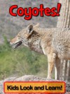 Coyotes! Learn About Coyotes and Enjoy Colorful Pictures - Look and Learn! (50+ Photos of Coyotes) - Becky Wolff