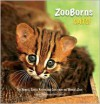 ZooBorns Cats!: The Newest, Cutest Kittens and Cubs from the World's Zoos - Andrew Bleiman, Chris Eastland