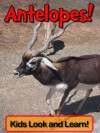 Antelopes! Learn About Antelopes and Enjoy Colorful Pictures - Look and Learn! (50+ Photos of Antelopes) - Becky Wolff