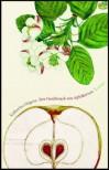 Der Geschmack von Apfelkernen - Katharina Hagena