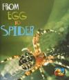 From Egg to Spider - Anita Ganeri