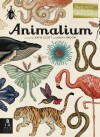 Animalium: Jenny Broom - Jenny Broom, Katie Scott