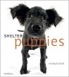 Shelter Puppies - Michael Kloth (Photographer)