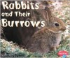 Rabbits and Their Burrows - Linda Tagliaferro