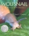 Wolfsnail: A Backyard Predator - Sarah C. Campbell, Richard P. Campbell