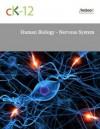 Human Biology - Nervous System - CK-12 Foundation