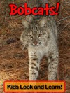 Bobcats! Learn About Bobcats and Enjoy Colorful Pictures - Look and Learn! (50+ Photos of Bobcats) - Becky Wolff