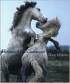 Horses of the Camargue - Hans W. Silvester, Sophie Delavoie, Laurel Hirsch