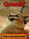 Caracals! Learn About Caracals and Enjoy Colorful Pictures - Look and Learn! (50+ Photos of Caracals) - Becky Wolff