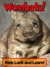 Wombats! Learn About Wombats and Enjoy Colorful Pictures - Look and Learn! (50+ Photos of Wombats) - Becky Wolff