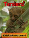 Tarsiers! Learn About Tarsiers and Enjoy Colorful Pictures - Look and Learn! (50+ Photos of Tarsiers) - Becky Wolff