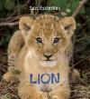 Eye on the Wild: Lion -