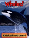 Whales! Learn About Whales and Enjoy Colorful Pictures - Look and Learn! (50+ Photos of Whales) - Becky Wolff